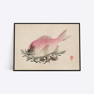 Rosa Fish illustration plakat i ramme