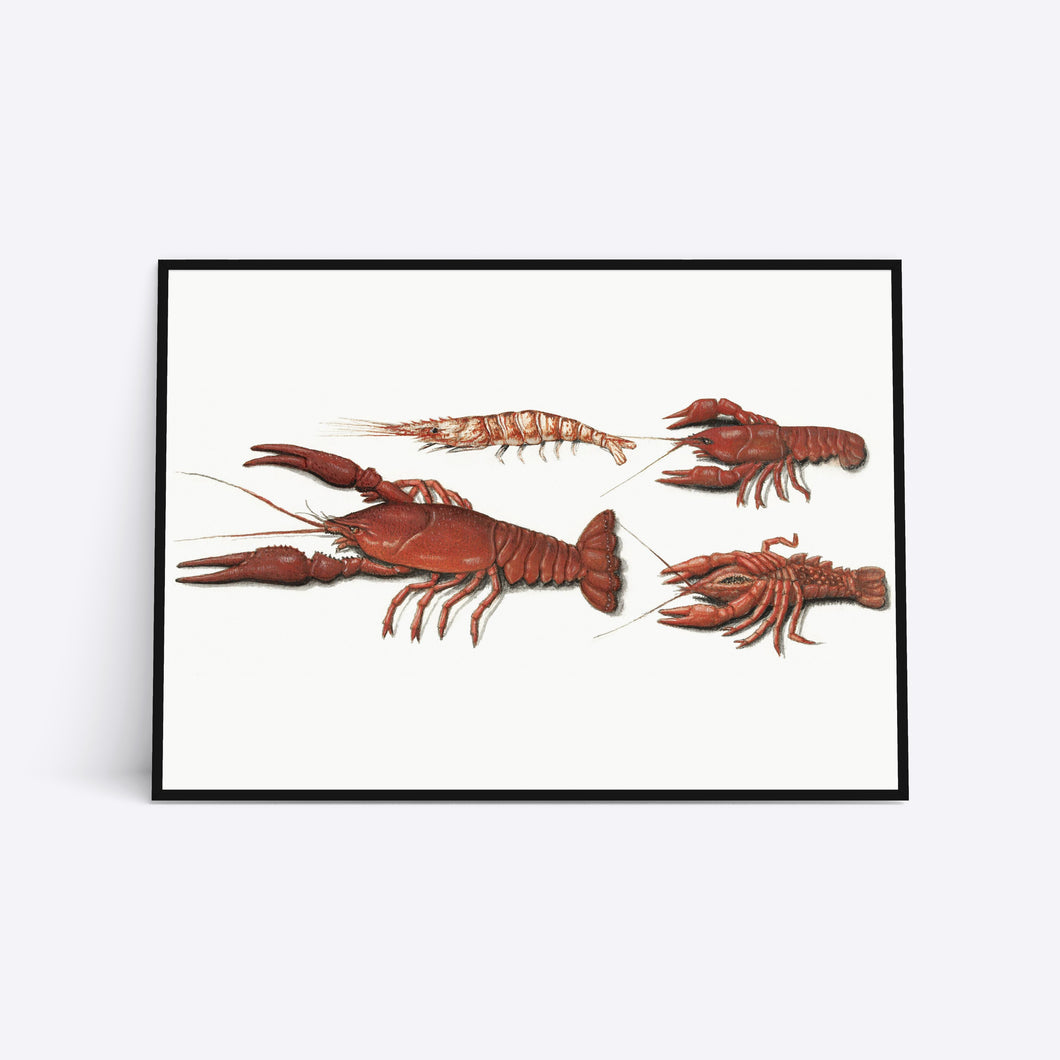 Red Lobster illustration plakat i ramme