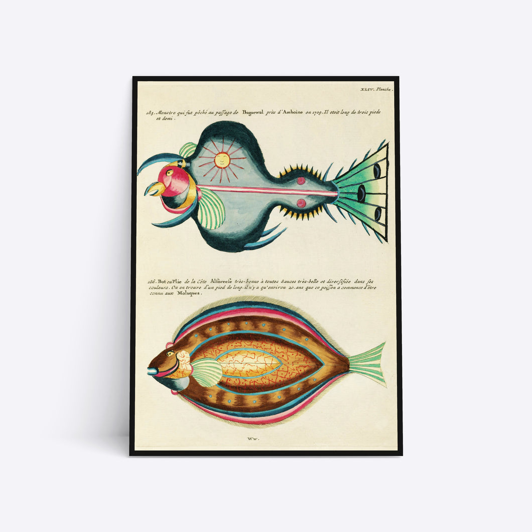 Exotic Fish illustration plakat i ramme