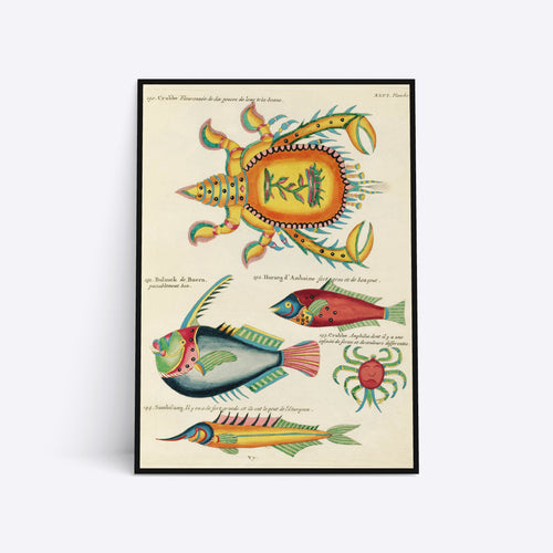 Crabs and Fishes illustrations plakat i ramme