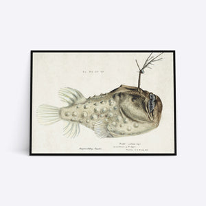 Prickly Anglerfish illustration plakat i ramme