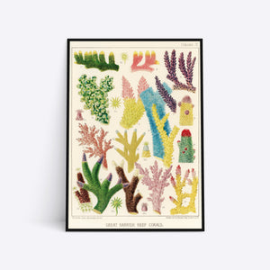 Great Barrier Reef Corals illustration plakat i ramme