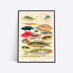 Great Barrier Reef Fishes Vol. 2 illustration plakat i ramme