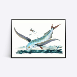 Flying Fish Vol. 2 illustration plakat i ramme