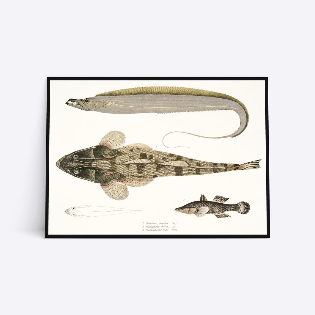Earth Colored Fish illustration plakat i ramme