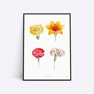 Flowers illustration plakat i ramme