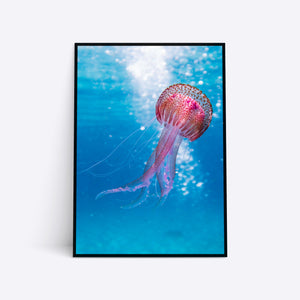 Red Jellyfish plakat i ramme