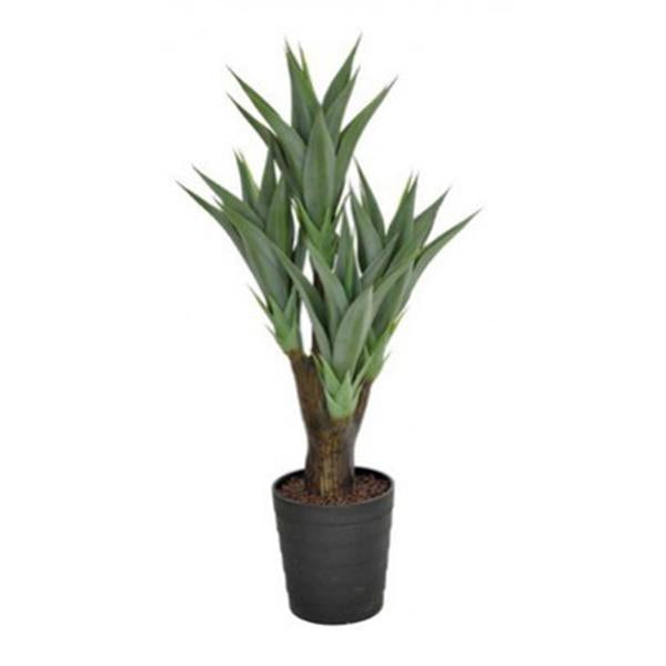 Potted Agave - 100cm