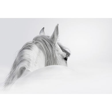 Andalusian Horse in the Mist Canvas (2 Sizes)