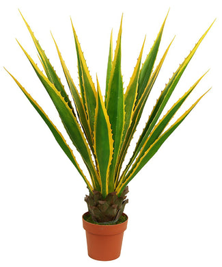 Potted Agave - 115cm