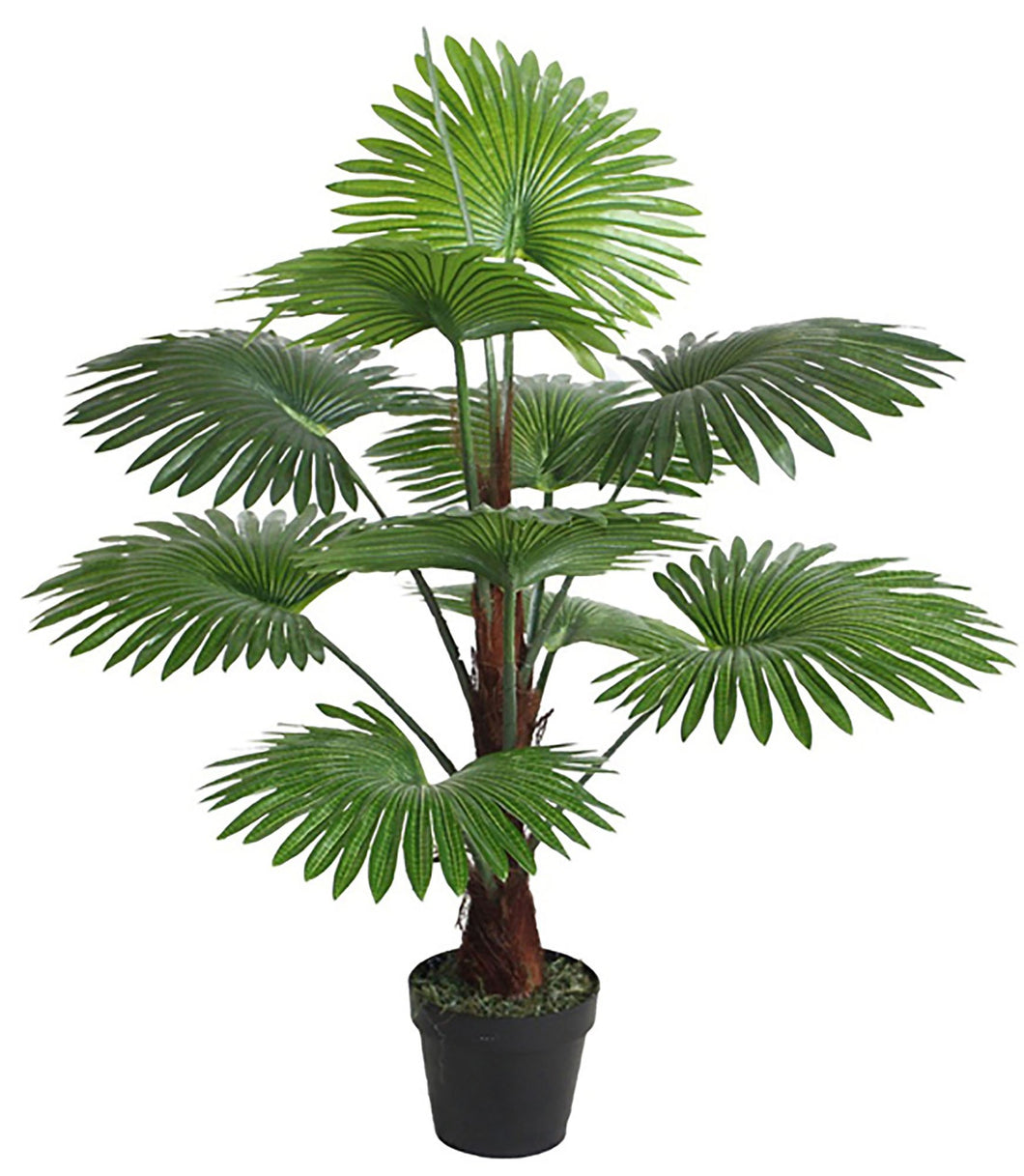Potted Fan Palm - 100cm