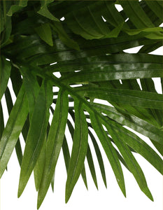 Potted Phoenix Palm - 120cm
