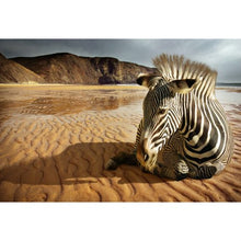 Zebra on Beach Original Canvas (4 Sizes)