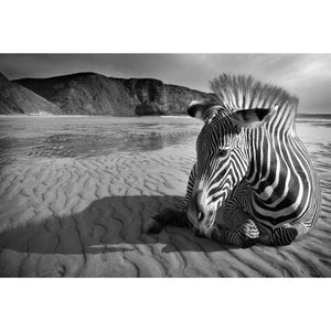 Zebra on Beach B & W Canvas (4 Sizes)