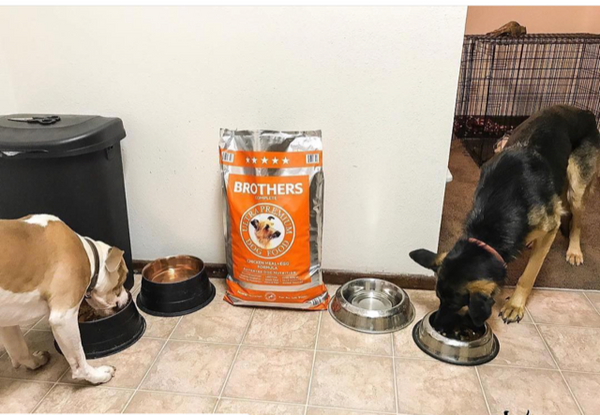The Best Way to Change Dog Food