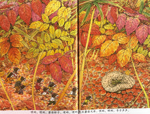 Load image into Gallery viewer, The 14 Forest Mice 12-Book Set