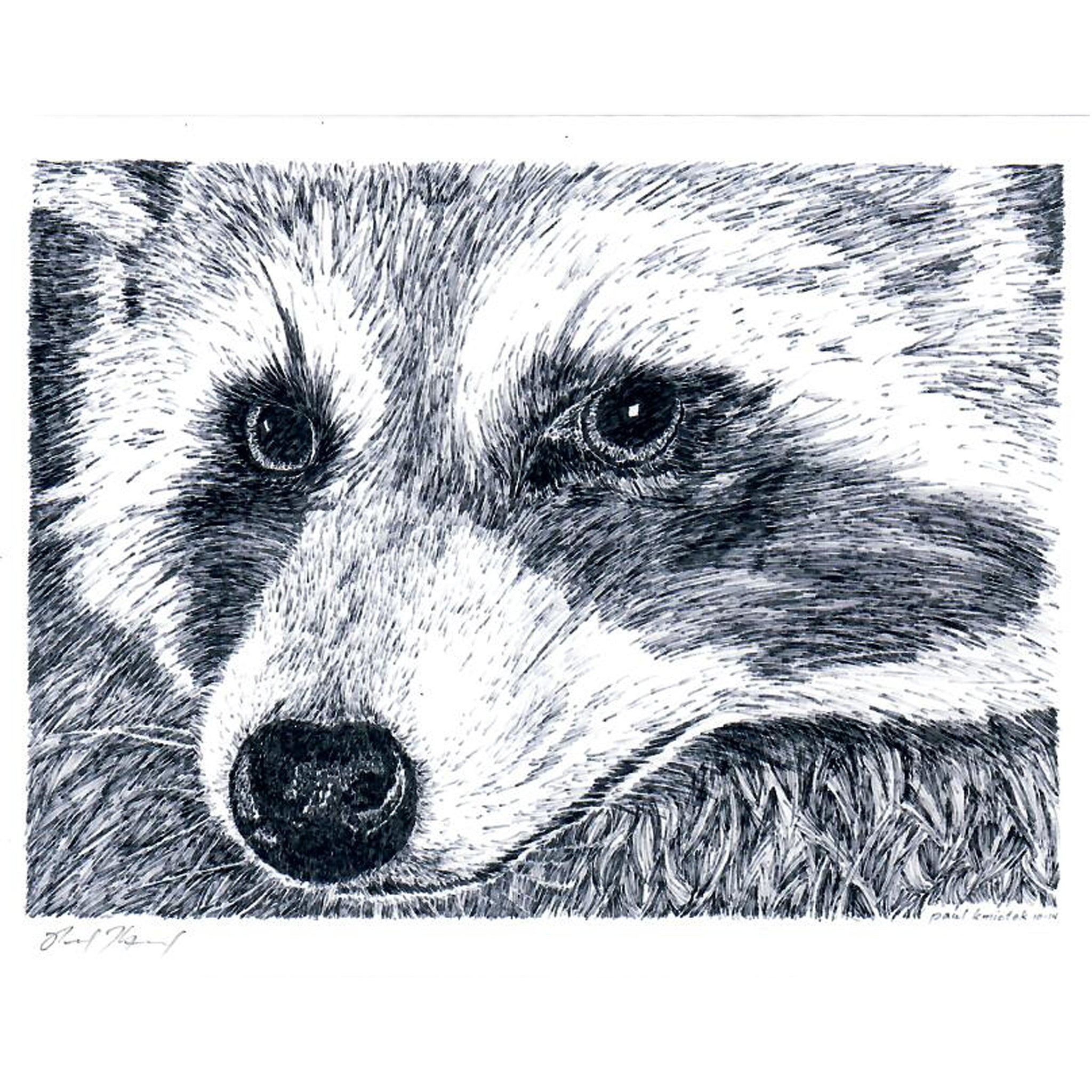Raccoon Notecard, Pen and Ink Artwork by Paul Kmiotek