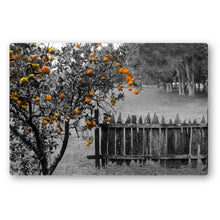 Load image into Gallery viewer, Fine Art Metal Print, NOLA Phototgraphy, Orange Tree & Fence