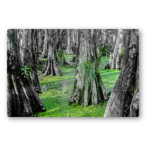 Fine Art Metal Print, NOLA Phototgraphy, Cyprus Trees