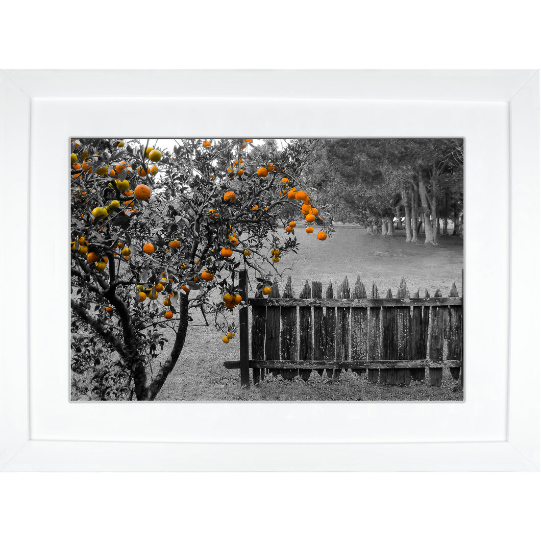Framed Fine Art Print, NOLA Photography, Orange Tree & Fence