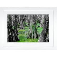 Load image into Gallery viewer, Framed Fine Art Print, NOLA Photography, Cyprus Trees in Swamp