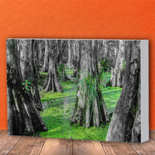 Load image into Gallery viewer, Fine Art Canvas Print, NOLA Photography, Cyprus Trees in Swamp
