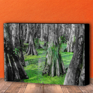 Fine Art Canvas Print, NOLA Photography, Cyprus Trees in Swamp