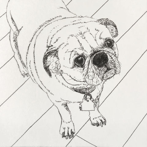 pug dog portrait pen drawing