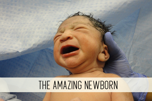 the amazing newborn online child care class