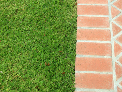 Kurapia Ground Cover pavers, paths, and walkways bricks