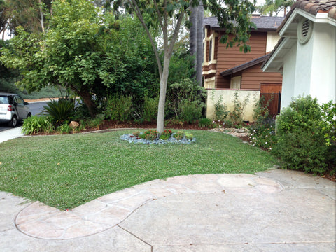 Kurapia Ground Cover residential lawn replacement front yard