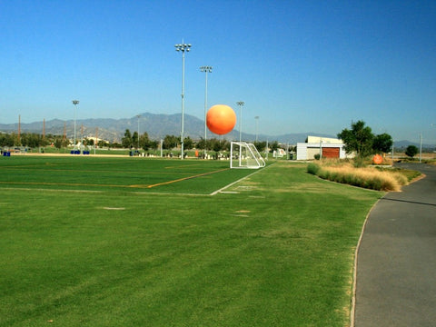 UC Verde Buffalo Grass parks and public places sports field