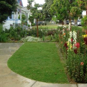 'UC Verde' Buffalo Grass Residential Lawn Replacement