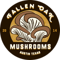 Fallen Oak Mushrooms