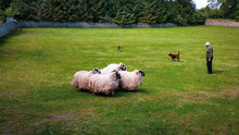 Load image into Gallery viewer, Irish Sheep Farm - Tracy McCrackin Photography