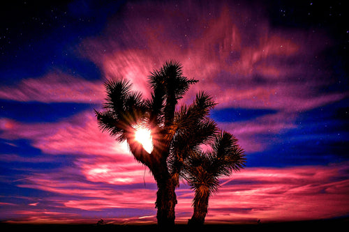 Moonrise over Joshua Tree (Color & BW) - Tracy McCrackin Photography