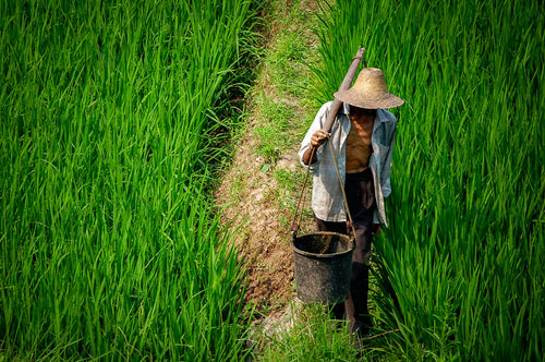 Rice Farmer in China - Tracy McCrackin Photography