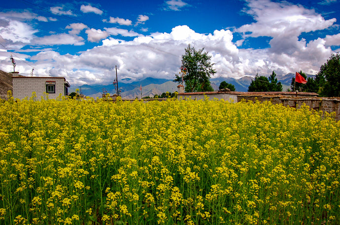 Infinite Floral Beauty Day - Places In Tibet - Lovely Place