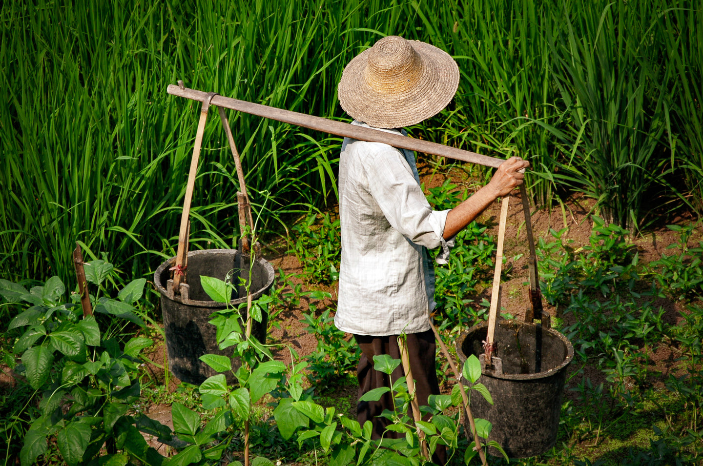 Chinese Rice Farmer With Buckets - Tracy McCrackin Photography
