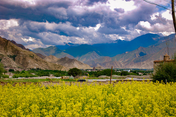 Springtime in Tibet - Places In Tibet Lovely Place
