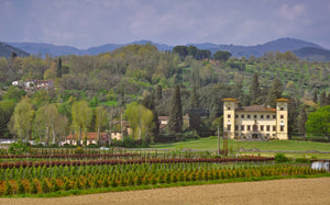 Tuscany 10 - Tracy McCrackin Photography