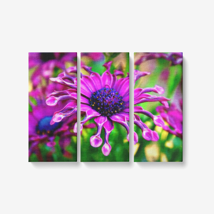 Purple Explosion Daisy - 3 Piece Canvas Wall Art for Living Room - Framed Ready to Hang 3x8
