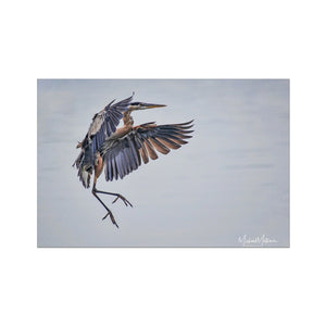 Sticking the Landing Fine Art Print