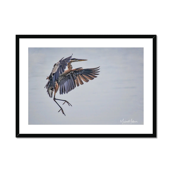 Sticking the Landing Framed & Mounted Print