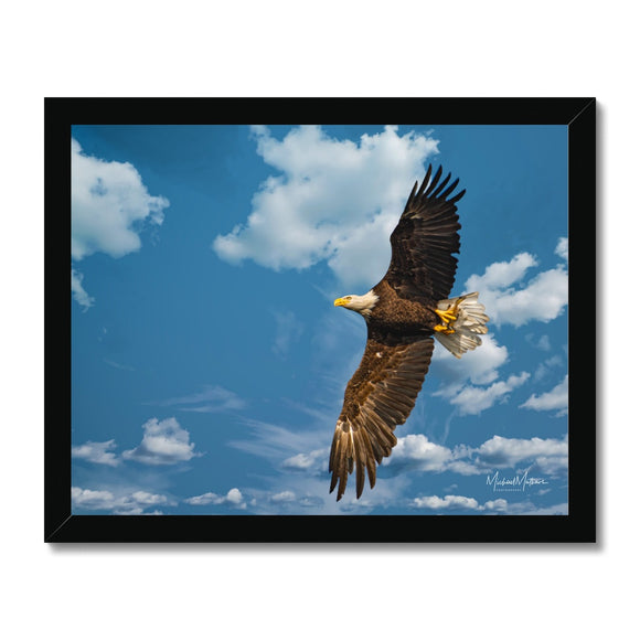 Bald Eagle With Lunch to Go Framed Print