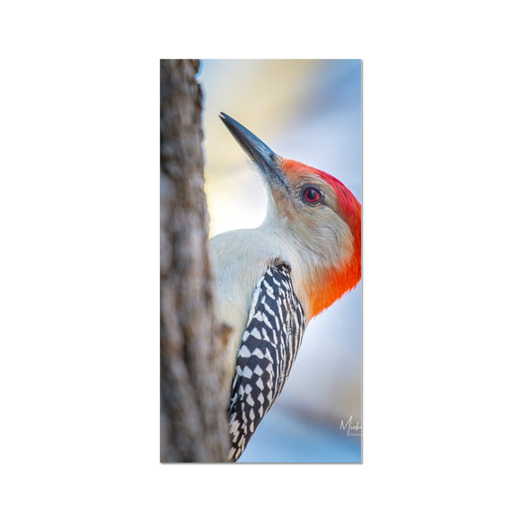 Peek-a-boo Red-bellied Woodpecker Fine Art Print