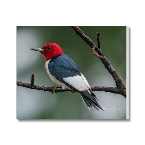 Red-headed Woodpecker on a Stick Canvas