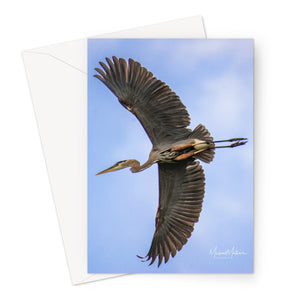 Great Blue Heron Flyby Greeting Card