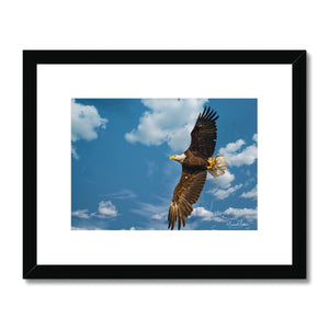 Bald Eagle With Lunch to Go Framed & Mounted Print