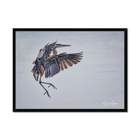 Sticking the Landing Framed Print